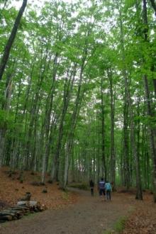 ばんちゃんの旅案内 -日本全国自走の旅--美人林