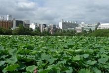 ばんちゃんの旅案内 -日本全国自走の旅--不忍池