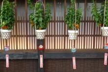 ばんちゃんの旅案内 -日本全国自走の旅--神楽坂まつり