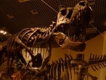 ばんちゃんの旅案内 -日本全国自走の旅--国立科学博物館