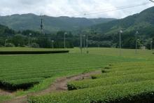 ばんちゃんの旅案内 -日本全国自走の旅--知覧茶畑