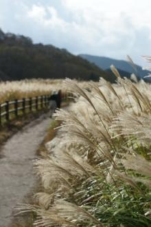 ばんちゃんの旅案内 -日本全国自走の旅--曽爾高原のススキ