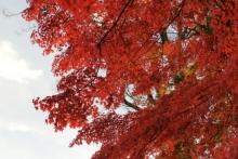 ばんちゃんの旅案内 -日本全国自走の旅--永源寺