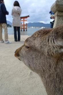 ばんちゃんの旅案内 -日本全国自走の旅--鹿