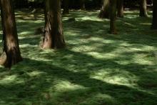 ばんちゃんの旅案内 -日本全国自走の旅--唐招提寺の苔庭