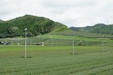 ばんちゃんの旅案内 -日本全国自走の旅--袋井の茶畑