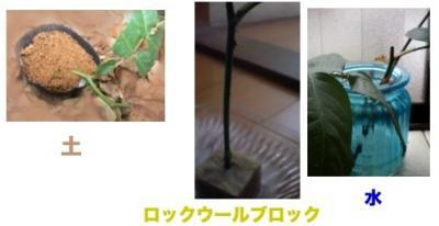 sasiki_20110601161754.jpg