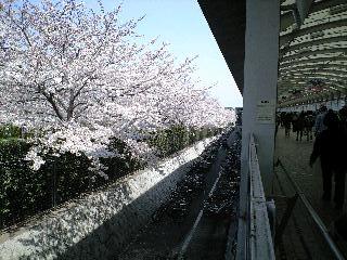 仁川から阪神競馬場通路