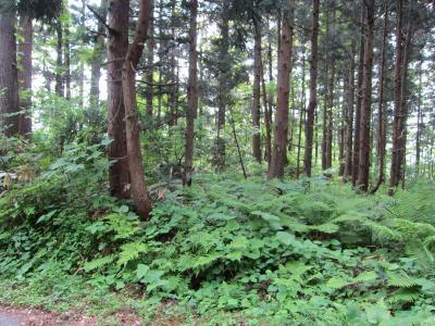 林道からみた二の郭らしき、下段