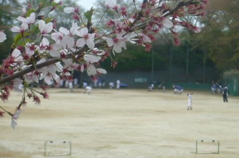 P1050303桜
