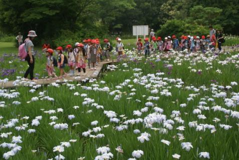 2006-01-18 年長城址公園花菖蒲園外保育 025 (800x536)