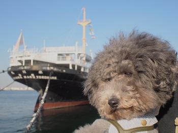 ジジ横浜へ 048