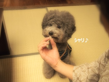 絆ジジさんごはん20140928-9