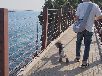 ジジさん城ヶ崎海岸へ20140929-13