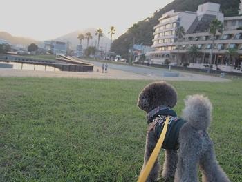 まどが浜海遊公園20140929-5