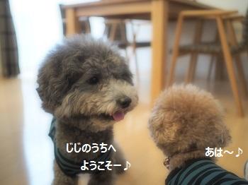 ちょこたんジジ家へ20141015-3