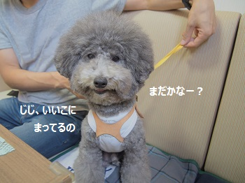 しろいぬカフェ20140923-2