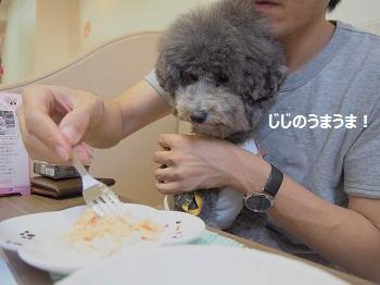 しろいぬカフェ20140923-6