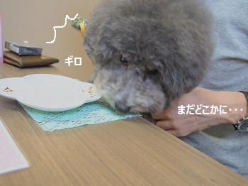 しろいぬカフェ20140923-7
