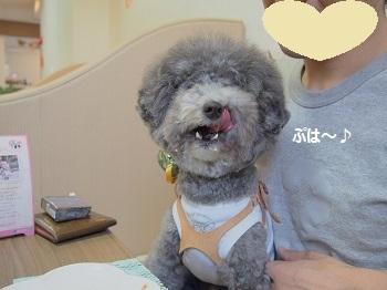 しろいぬカフェ20140923-8