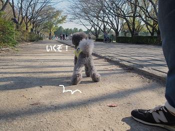 柏の葉公園20141018-6