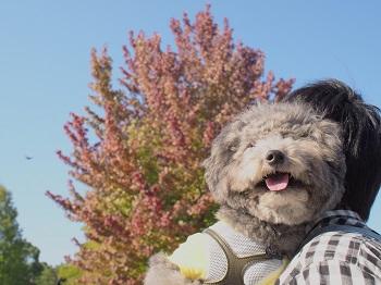 柏の葉公園20141018-8