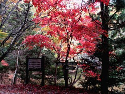 滝坂の道 (2)