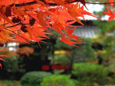 円城寺 (2)