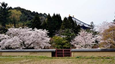 二月堂供田と大仏殿