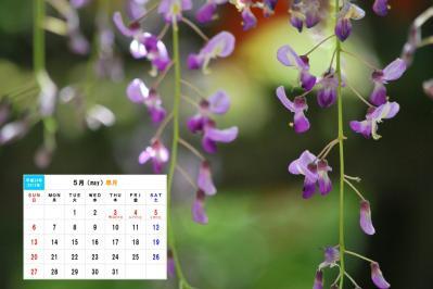 5月 春日の藤-1