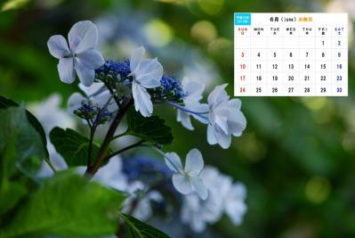6月 矢田寺紫陽花-1