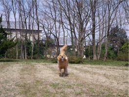 20110407dan1.jpg