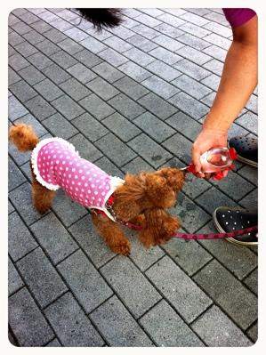 fc2blog_20120829164551ddd.jpg
