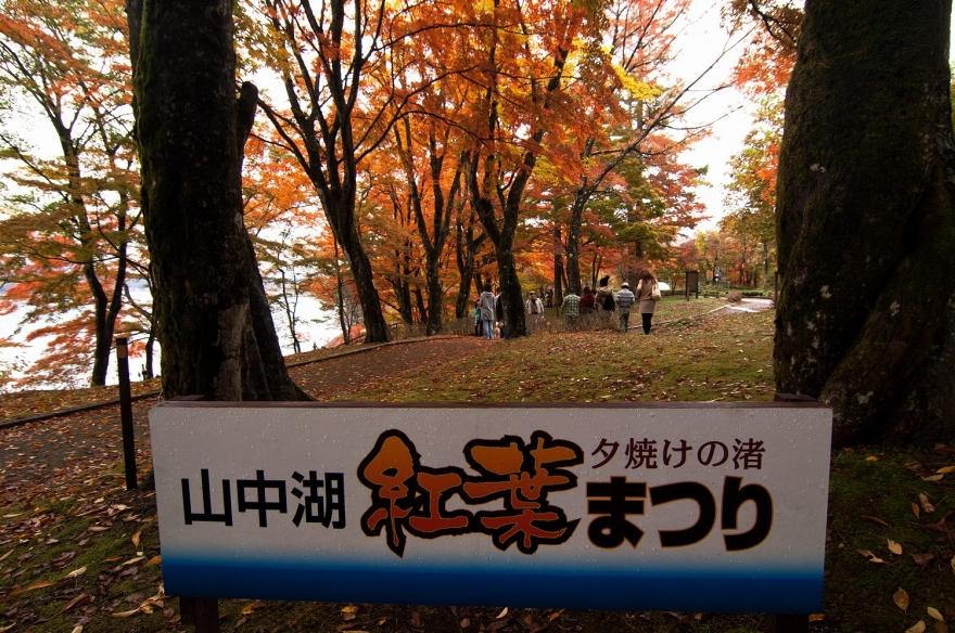 2013 11 04 山中湖紅葉 D2x (5)@s