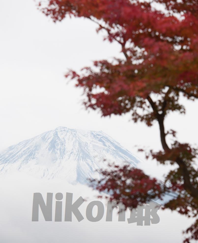 2013 11 09  精進湖 D3x (78)@s