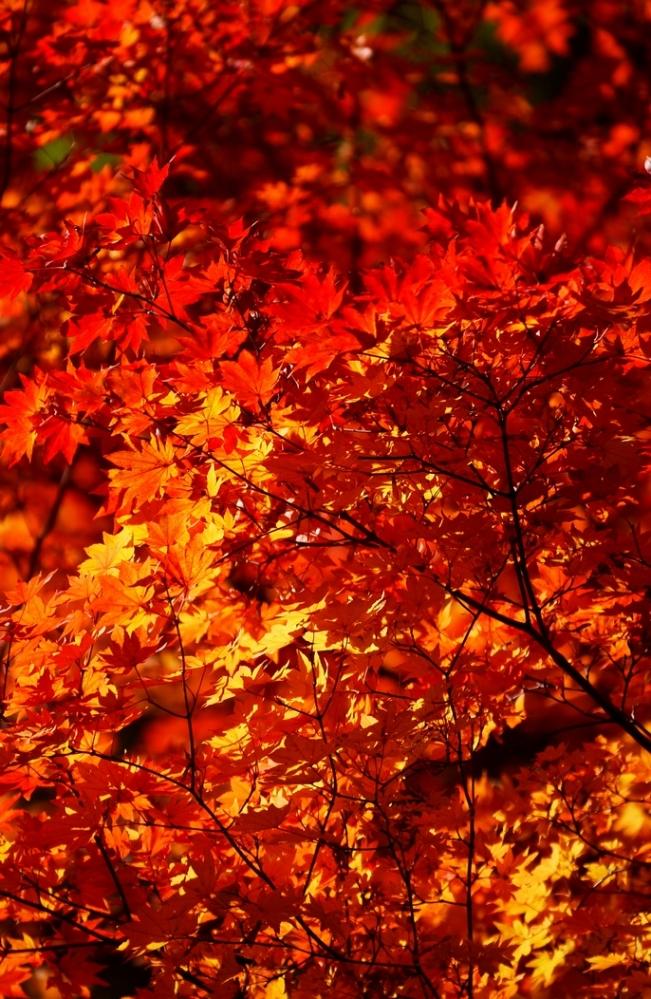 2013 10 28 松原湖 紅葉 (57)@S