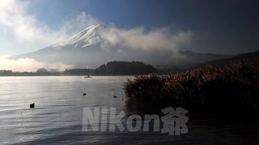 2013 11 17 河口湖紅葉 D3x (1)@S