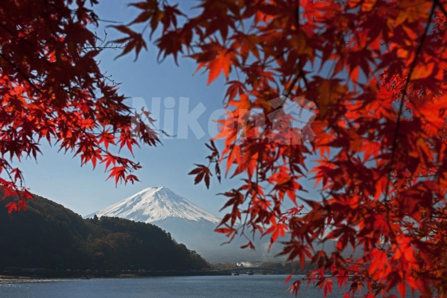 2013 11 17 河口湖紅葉 D3x (11)@S
