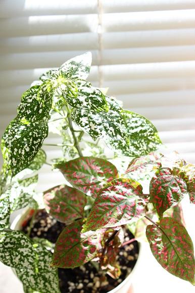 観葉植物ー2-4
