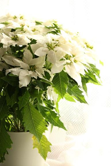 観葉植物ー2-5