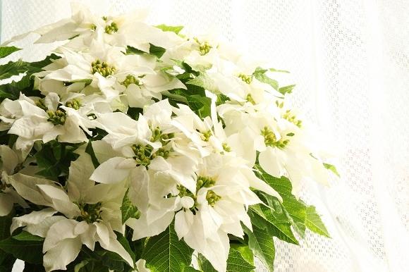 観葉植物ー2-6