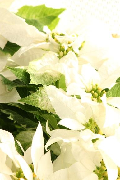 観葉植物ー2-7