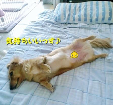 PAP_0005_convert_20120411083819.jpg