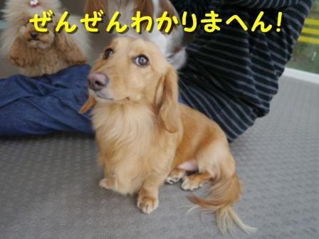 dogrun10_convert_20120411061620.jpg