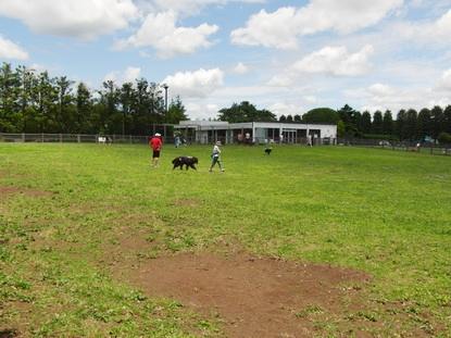 アンデルセン公園ドッグラン