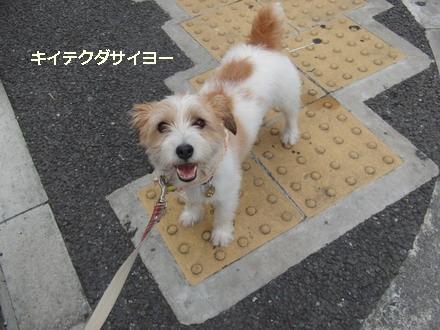 キイテクダサイヨ