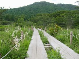 沼原湿原木道2