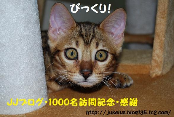 1000突破記念