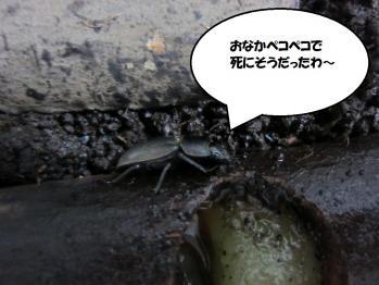 スイートプリュキュア (9)