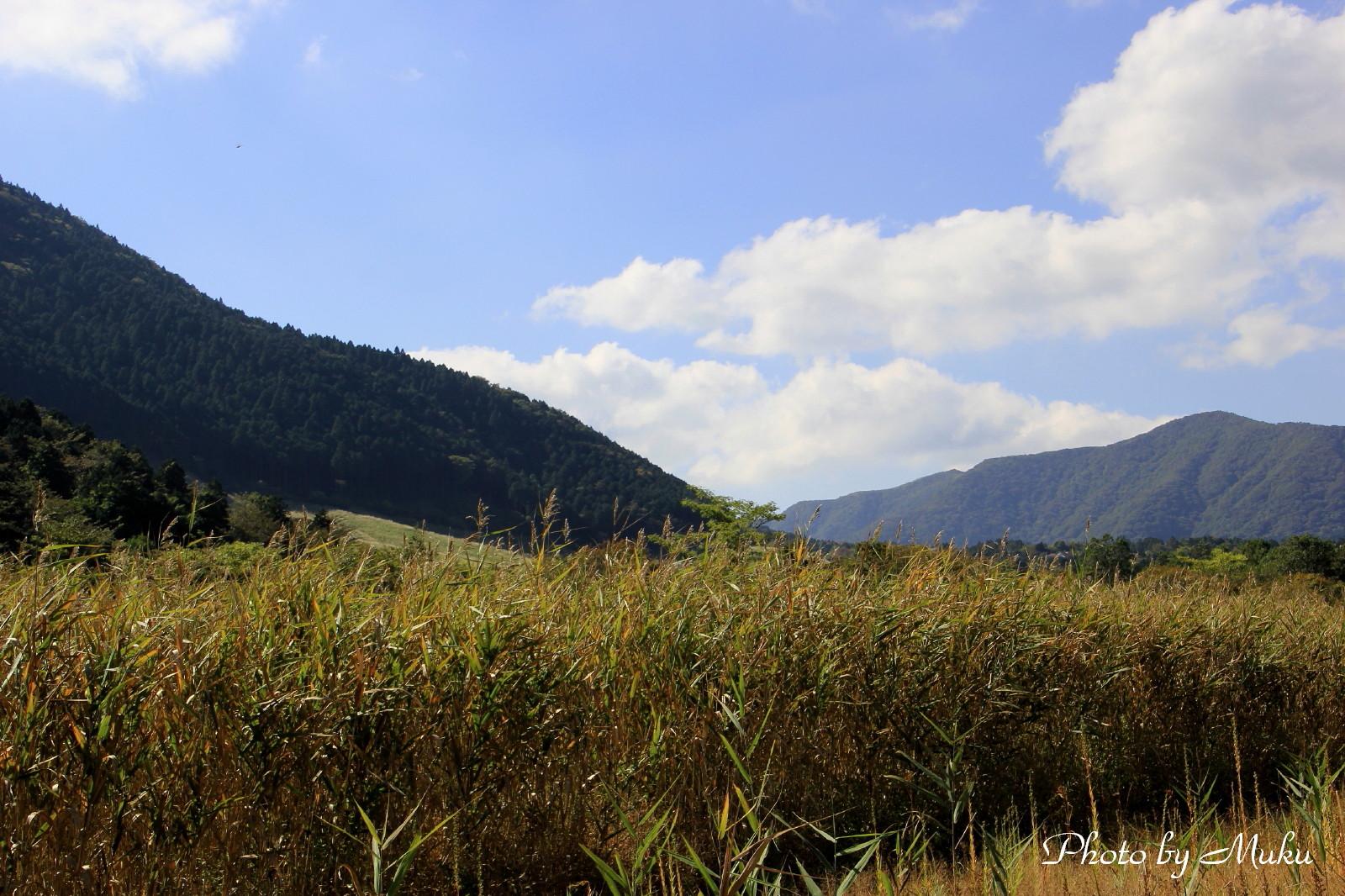 2014.10.19 湿原の葦原 (湿性花園:神奈川県下足柄郡箱根町)